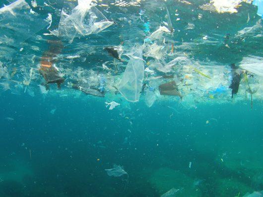 A complexidade ambiental de tartarugas, baleias e galinhas